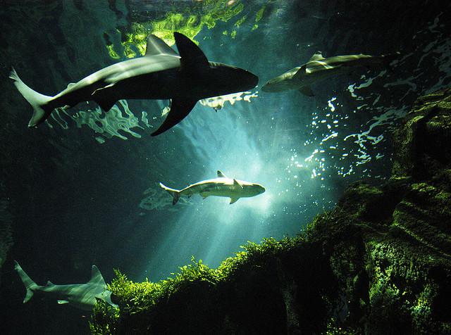 Malvern Entrepreneur Taking A Dip In The 'Shark Tank' Friday Night