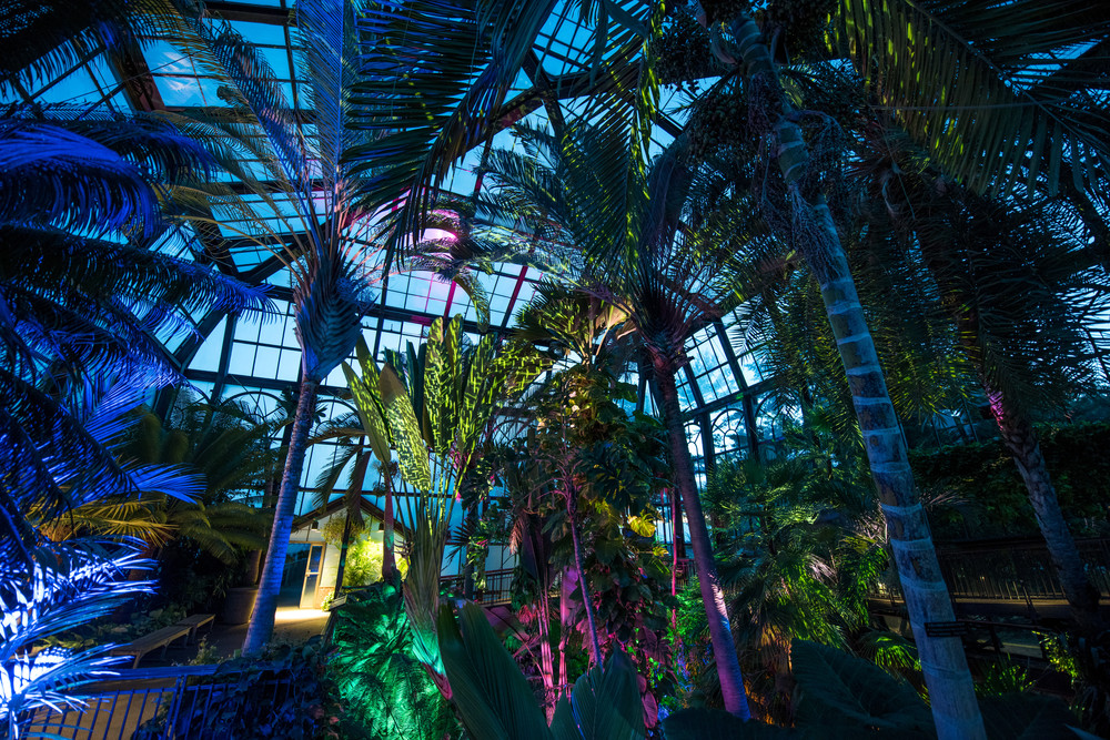 Acclaimed Nightscape Installation to Return to Longwood Gardens in August