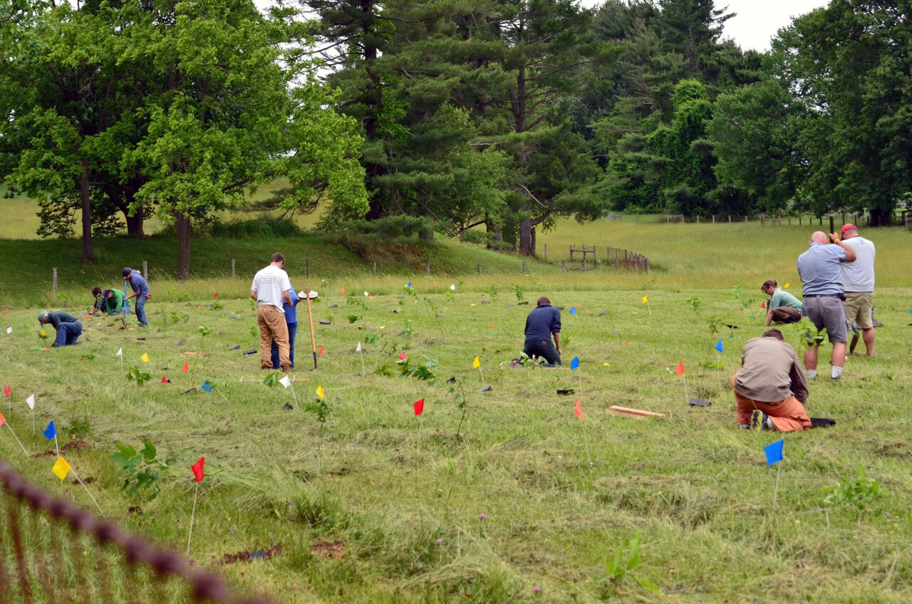 Volunteers Protect White Clay Creek Headwaters by Planting 500 Trees
