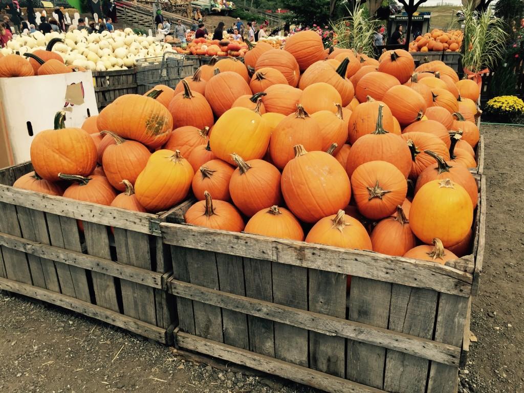 Chester County Ag Notes: Pumpkin Season