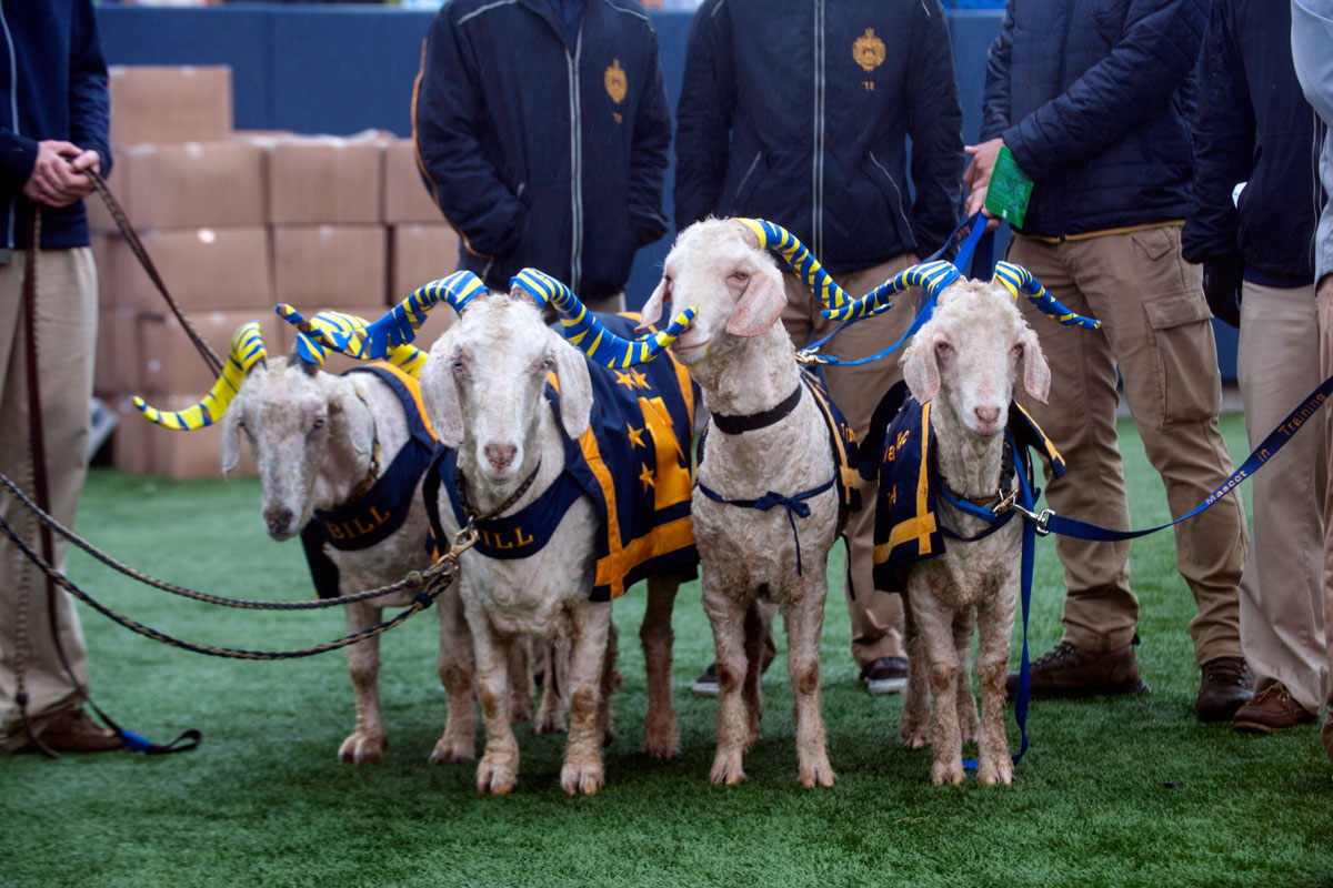 Unionville's New Bolton Center Treats Sick Navy Goat Before Saturday's Army Game