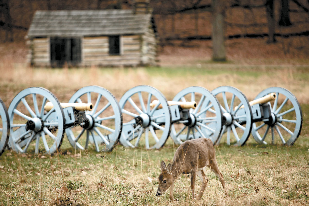 Chester County Briefs: Deer Culling Continues in Valley Forge, NASDAQ Adds Egalet, First Backpack Drive Hosted by LGBTQ Org, and Date for Swearing In Set