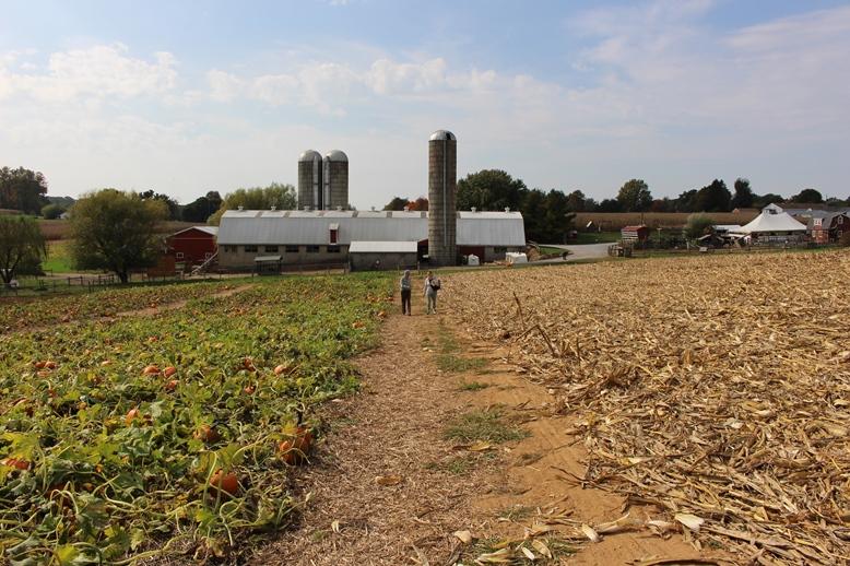 King's Pumpkin Farm in Parkesburg