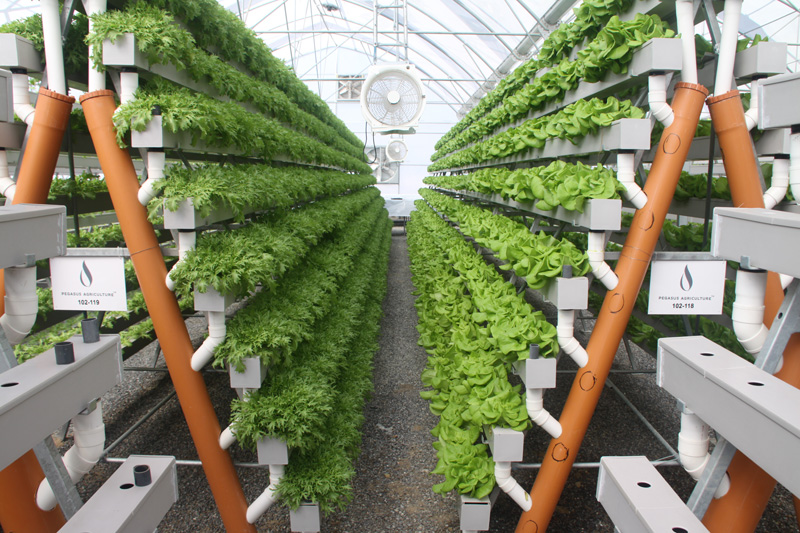 Middle Eastern Hydroponics Giant Supports Kennett S