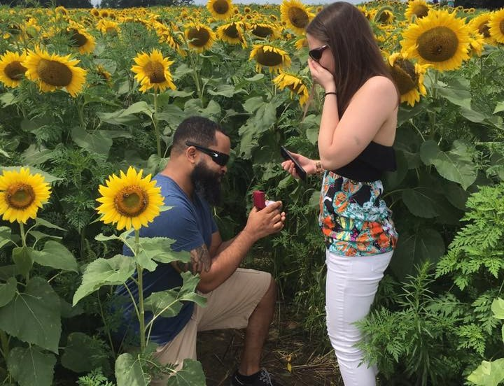 Field of Sunflowers Draws the Masses to Elverson