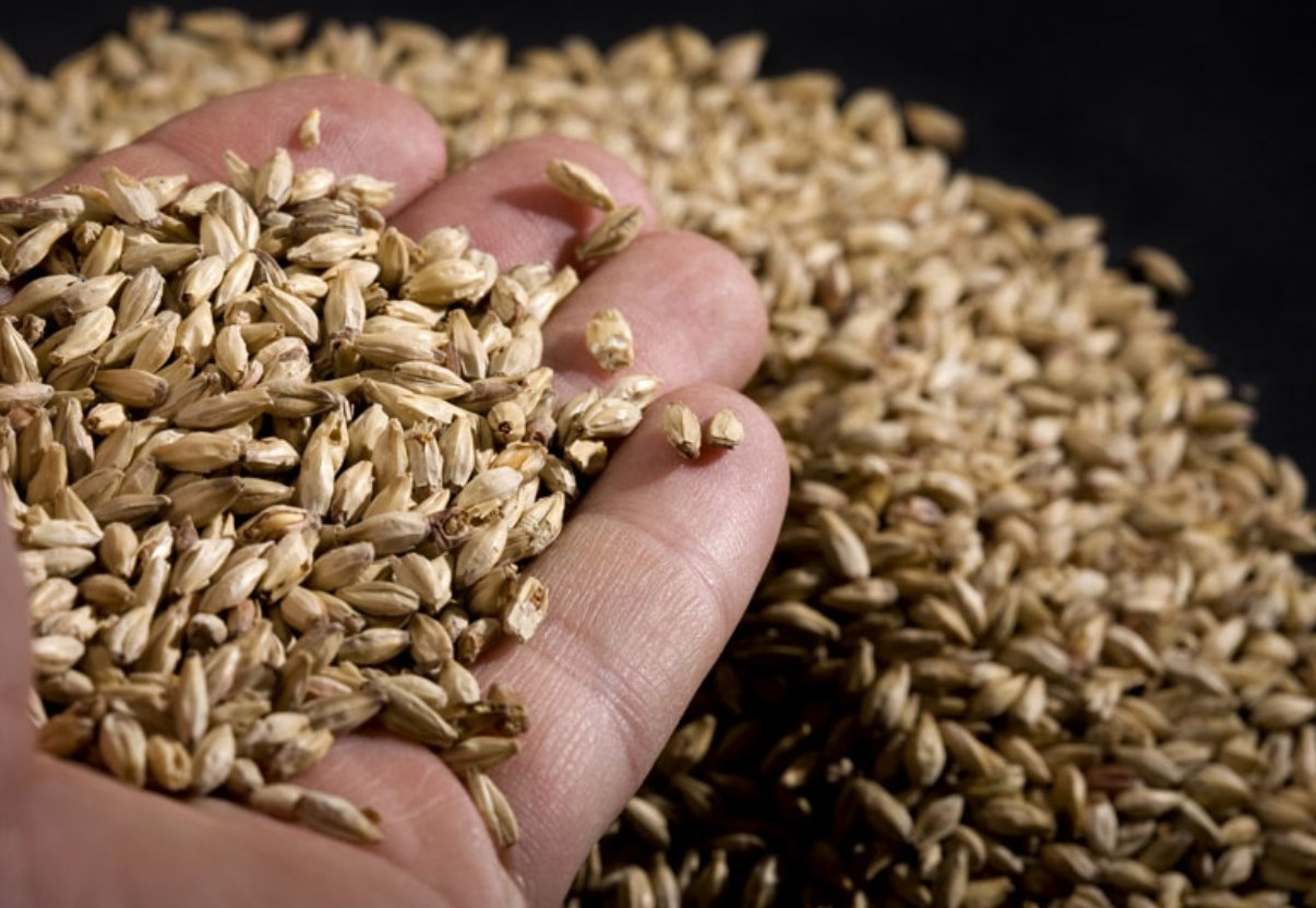 Craft Brewers Get Crafty on Local Malt Sources