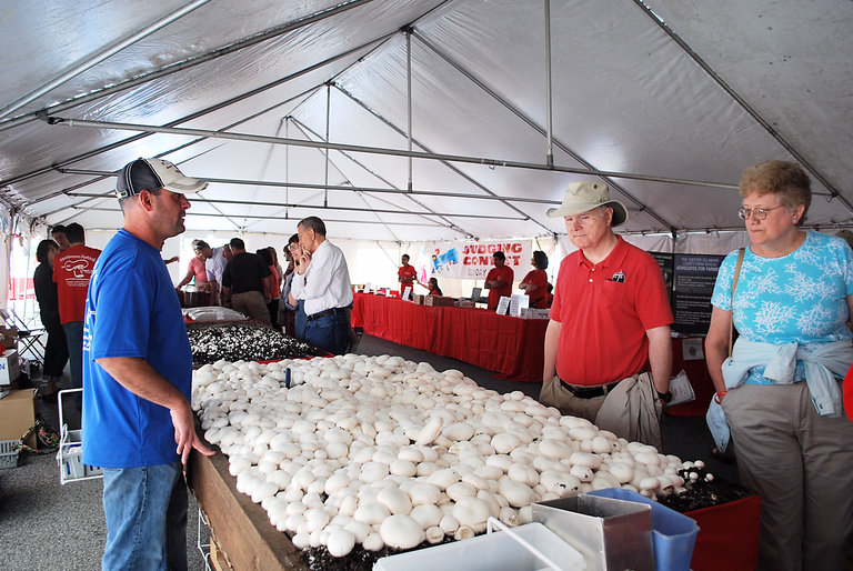 Kennett Square Indulges a Harvest of Fun at Mushroom Festival