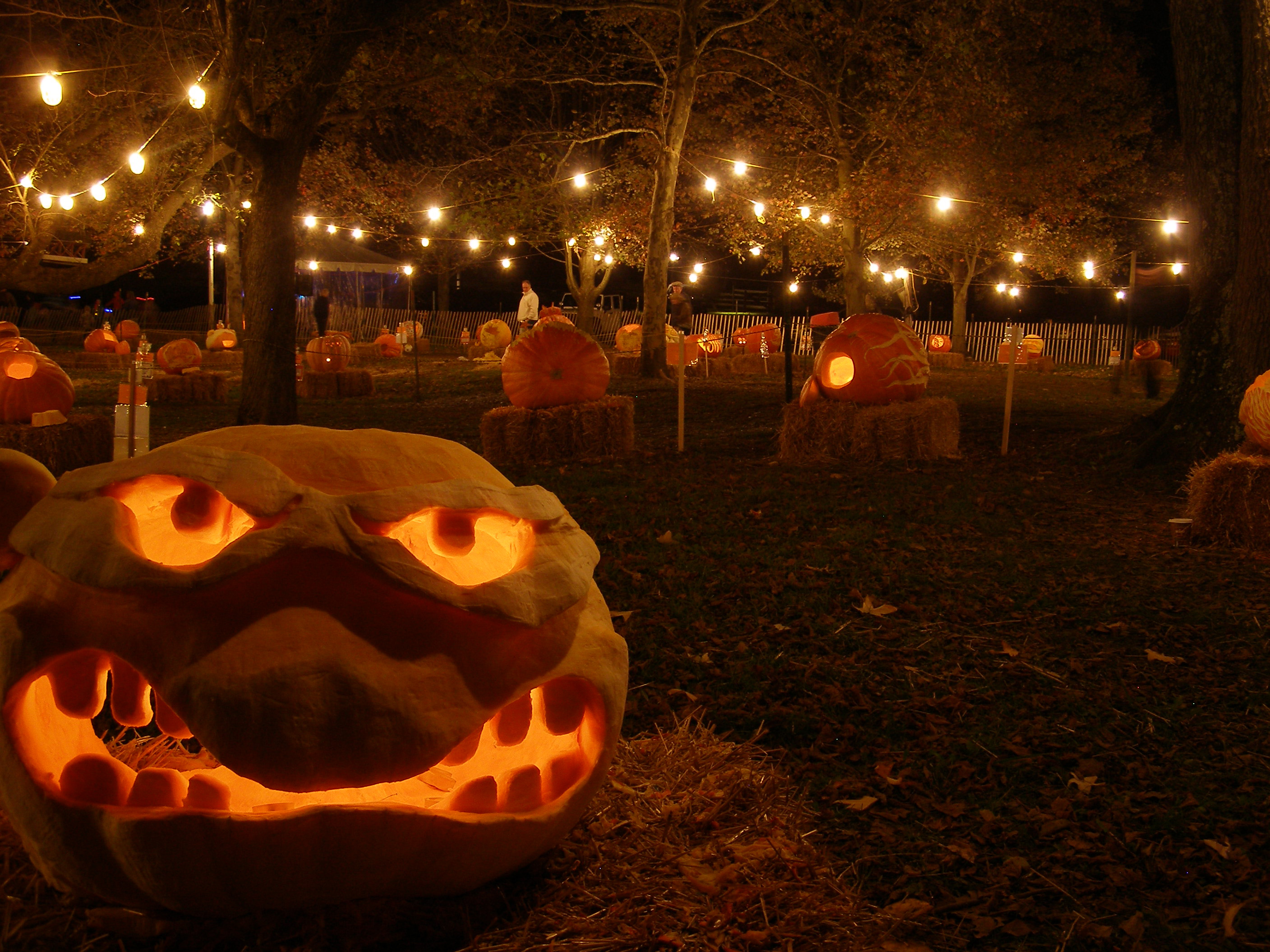 Chadds Ford Historical Society's Annual Great Pumpkin Carve Kicks Off Today