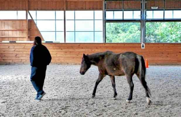 Thorncroft Equestrian Center in Malvern Helps Inmates Deal with Trauma, Addiction