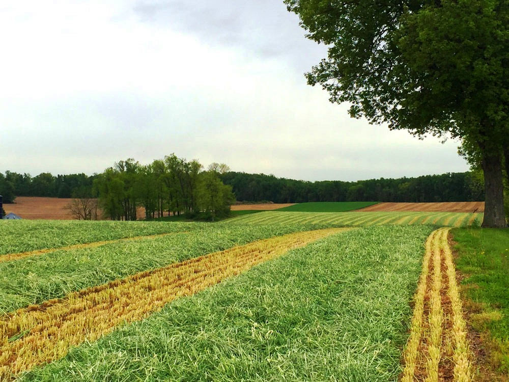 Chester County Reaches Milestone in Farmland Preservation