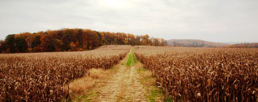 Natural Lands, West Vincent Township Plan to Open Bryn Coed Farms to Public