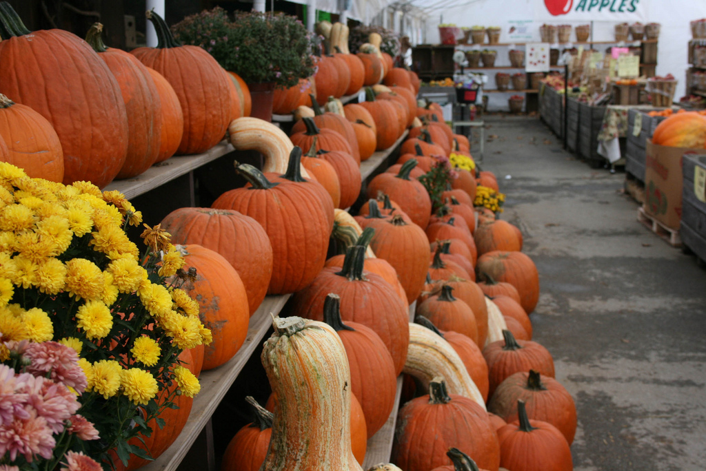 Plan Your Fall Weekends with VISTA Today's Free Guide to Chester County's Pumpkin Patches & Halloween Fun