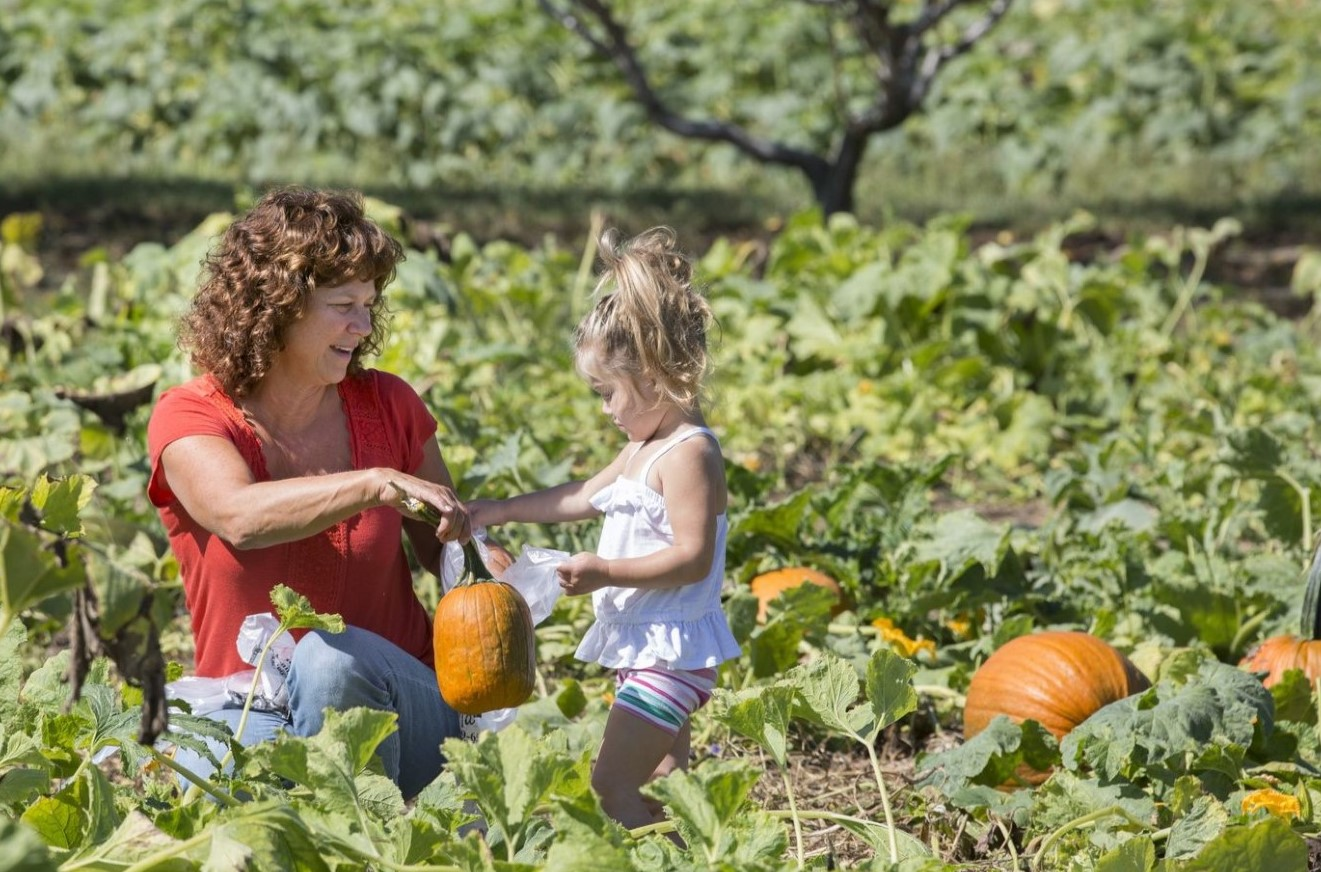 Weather Causes Tens of Thousands of Dollars in Lost Revenue for Local Pumpkin Farmers
