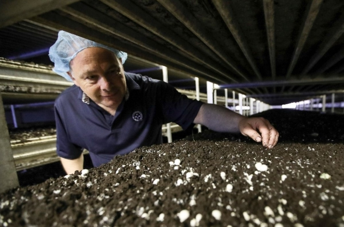 Chesco's Relationship with County Near Shanghai Helps Local Mushroom Farmer Gain Foothold in China