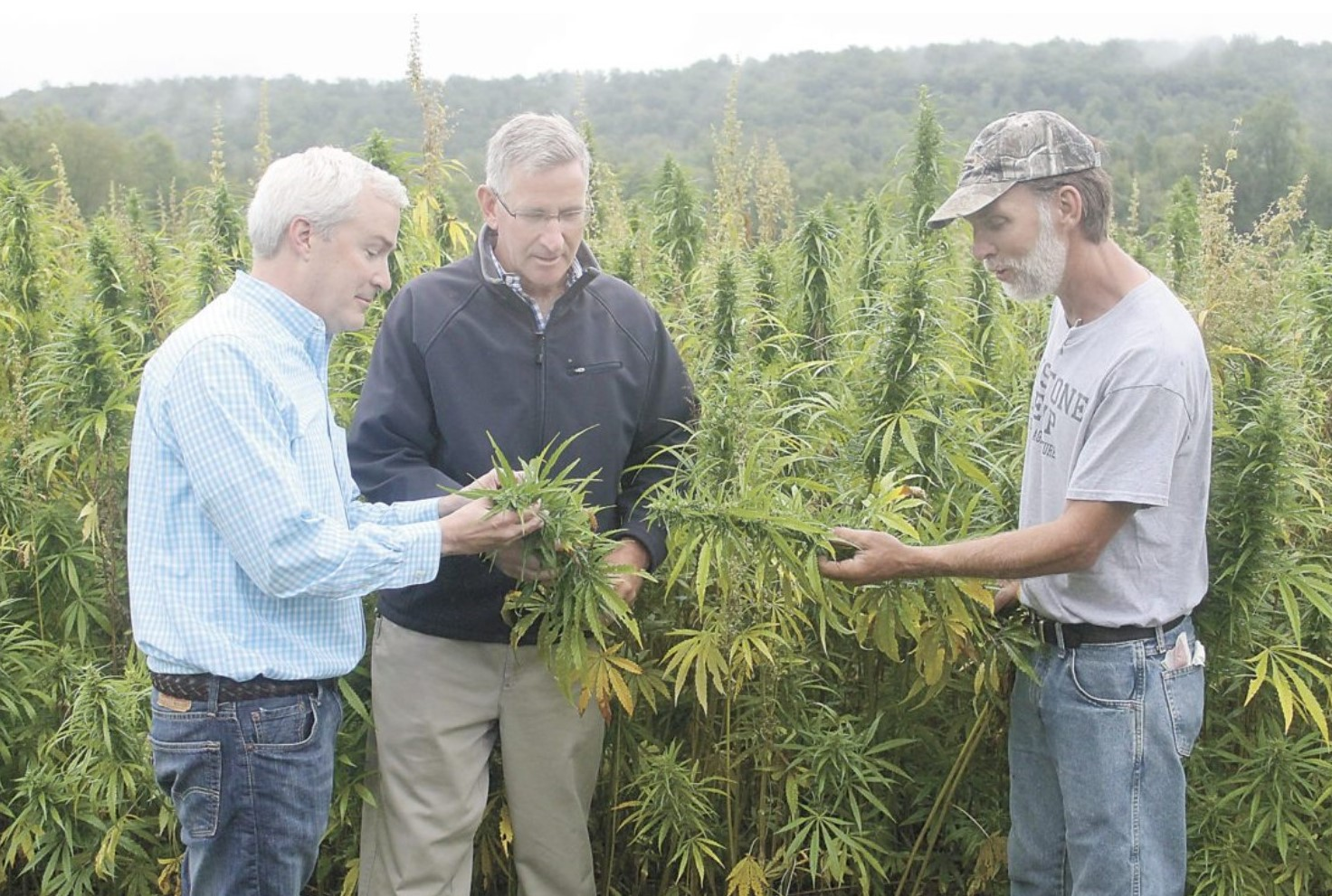 State's Ag Department Inundated with Applications to Grow Hemp; Our Neighbors Lead the Way