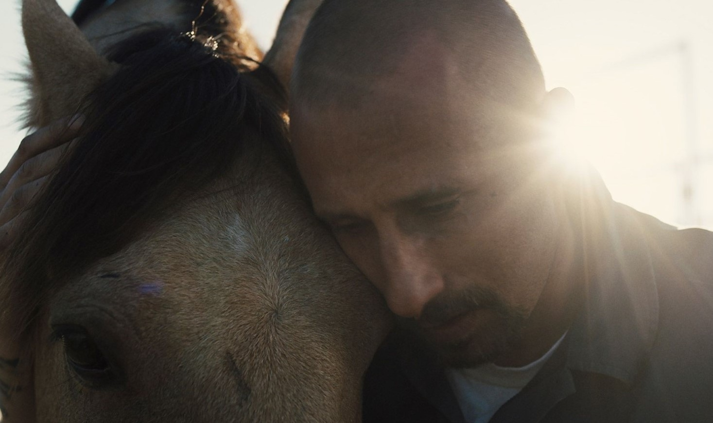 Nonprofit to Host Movie Screening, Discussion of How Horses Are Rehabilitating Local Prisoners
