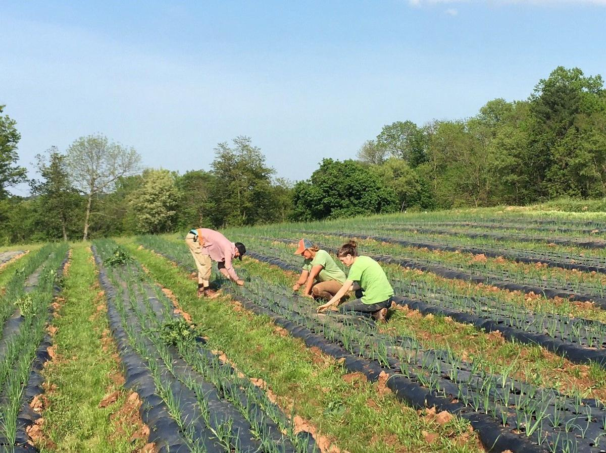 Trend of Community-Supported Agriculture Continues to Grow in Chester County