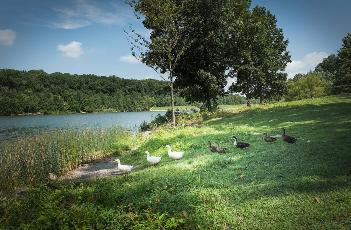 Established as the First Park in Chester County, Hibernia Park Remains a Historic Gem
