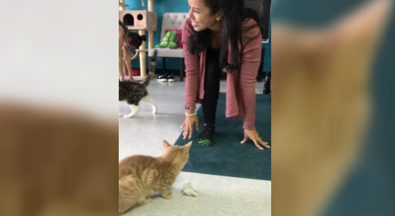 Café in Delco Offers a Different Kind of Yoga Class. This One's Got Cats