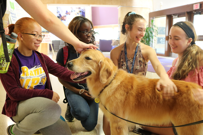 WCU Students De-Stress During Exams with the Help of Therapy Dogs