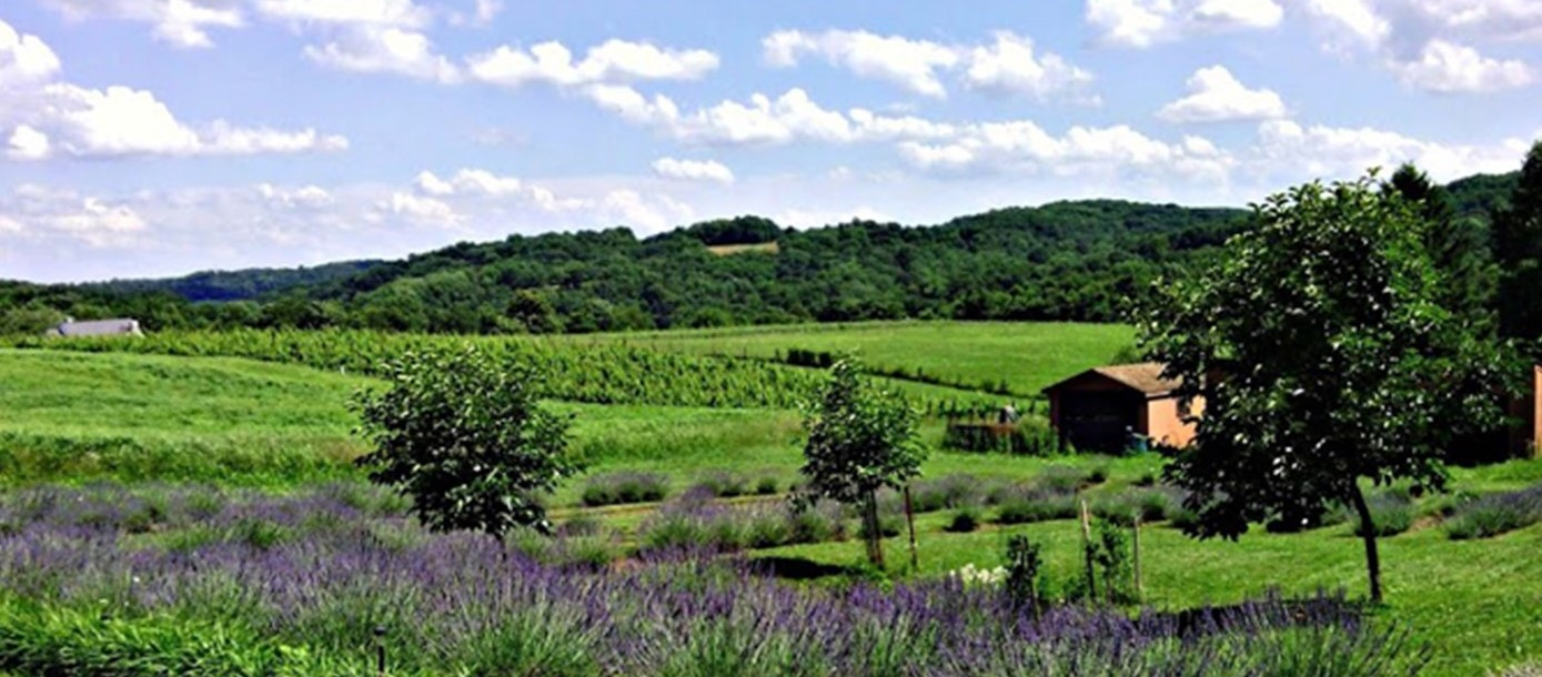 New Owners Have Big Plans for Stargazers Vineyard in Coatesville