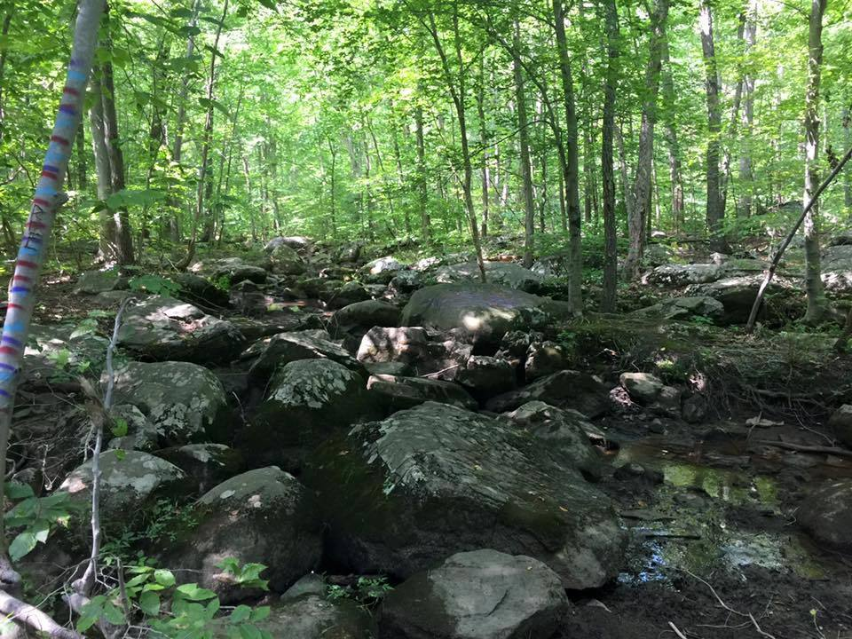 Natural Lands Purchases 82 Acres to Add to Crow's Nest Preserve in Warwick Township