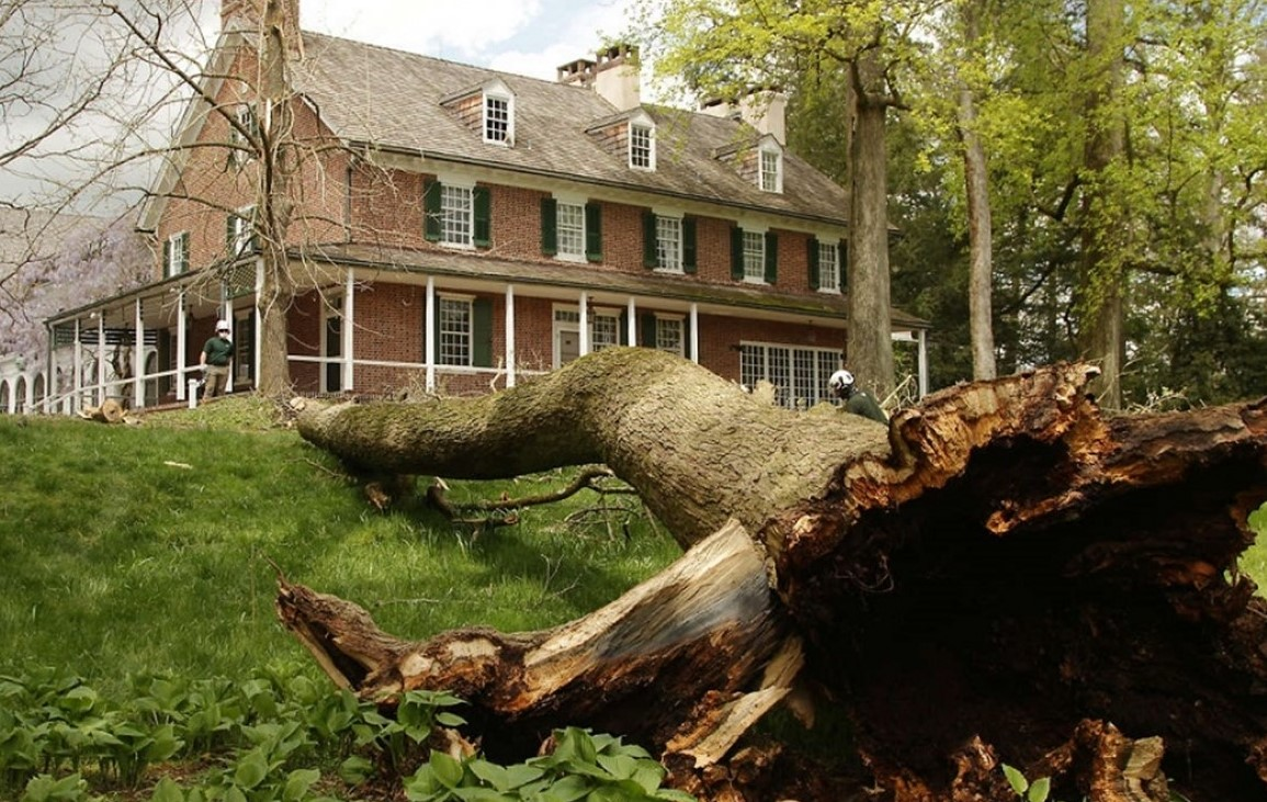 Mother Nature Takes One of Her Own, Fells Centuries-Old Tree at Longwood Gardens