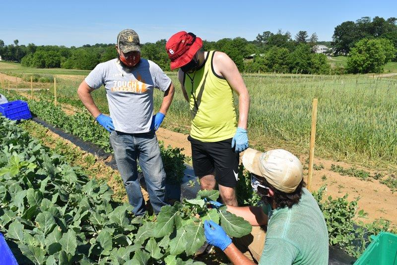 Reliant Upon Volunteers, Chester County Food Bank's Ag Program Produces Fresh Food for Those in Need