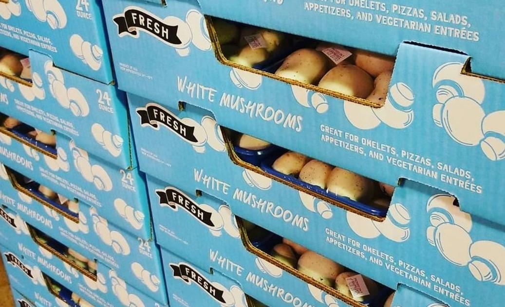 Avondale-Based Mushroom Grower Files for Bankruptcy