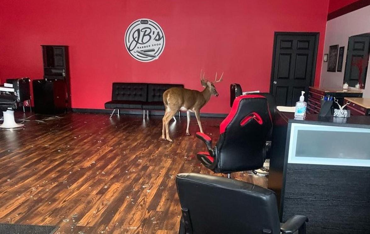 Barber Shop in Downingtown Gets Strange Visitor