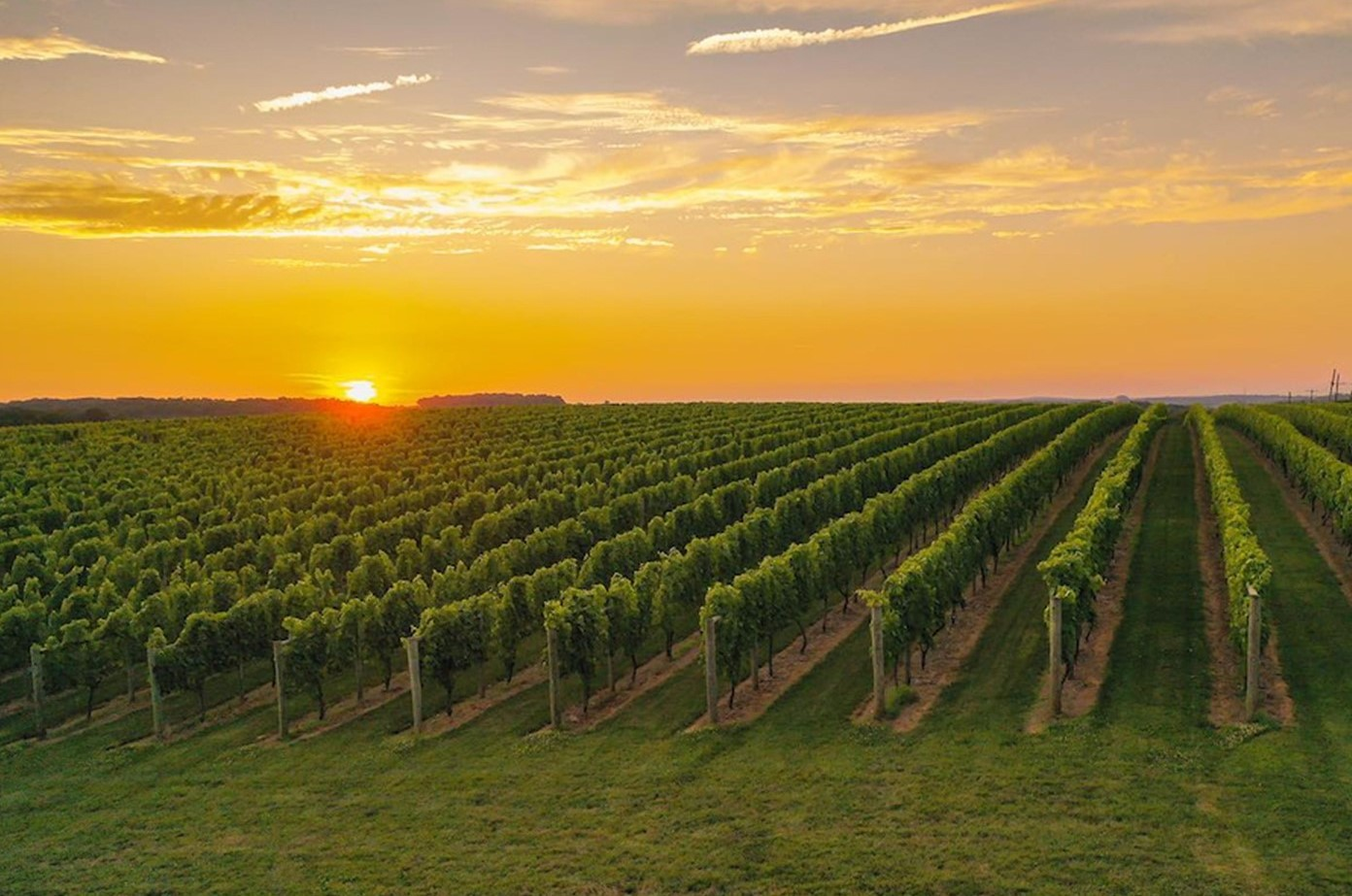 Going Vineyard Hopping This Fall? According to Experts, Southern Chester County Is the Place to Be