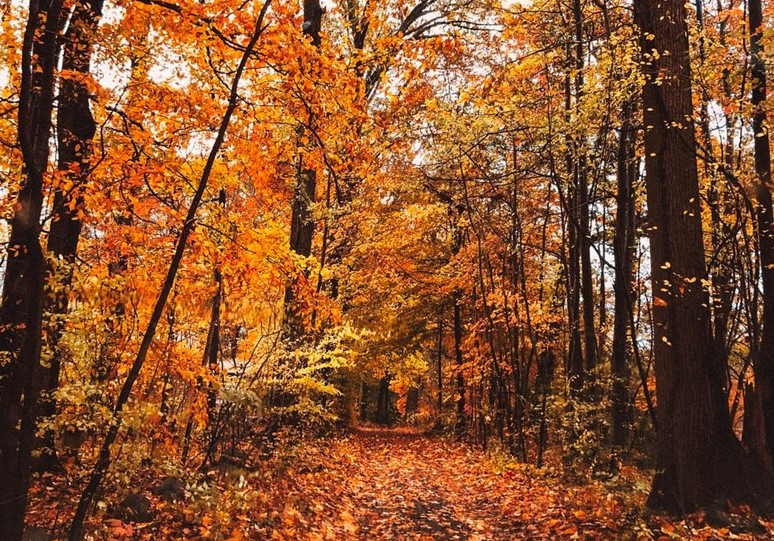 Three Spots in Chester County Among State's Best Places to Enjoy Tail-End of Fall Foliage Season