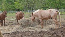 Chenoa Manor Chester County animal rescue
