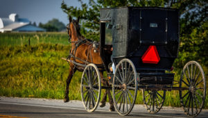Amish buggy in Lancaster County